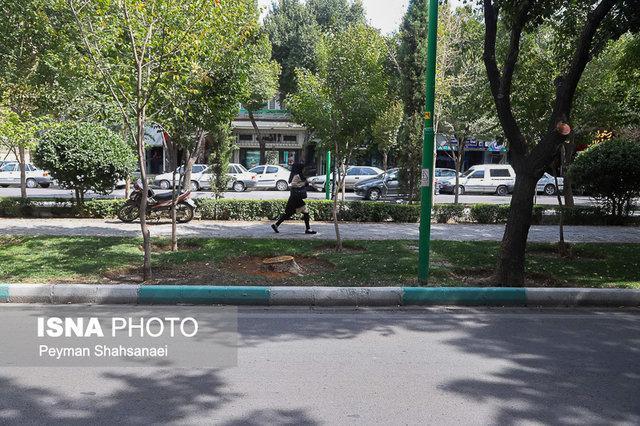 حقیقت قطع درختان چهارباغ بالا، همه فضای سبز اصفهان در خطر است