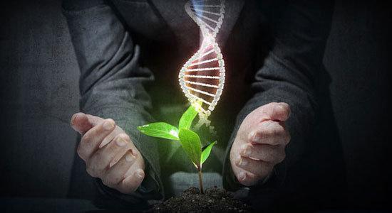 کاهش اثرات سوء تغییرات اقلیمی بر کشاورزی کشور با مهندسی ژنتیک
