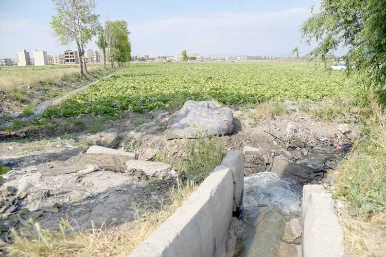 آبیاری مزارع هشتگرد با فاضلاب خام