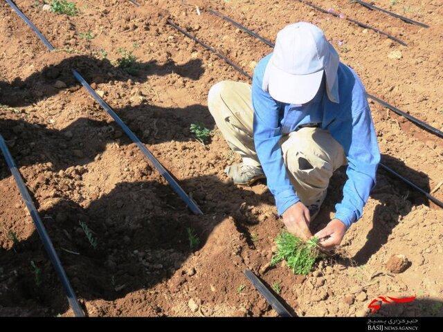 10 گونه گیاهی در کرمانشاه احیا می گردد