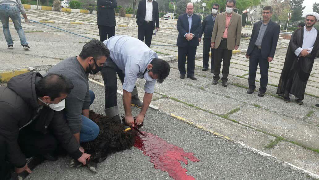 اجرای سنت مذهبی قربانی در دانشگاه آزاد اسلامی کرج