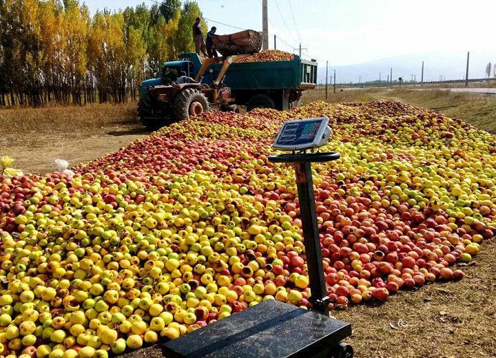 خبرنگاران کوتاه کردن دست دلالان، چاره سیب صنعتی بدمنظر در آذربایجان غربی