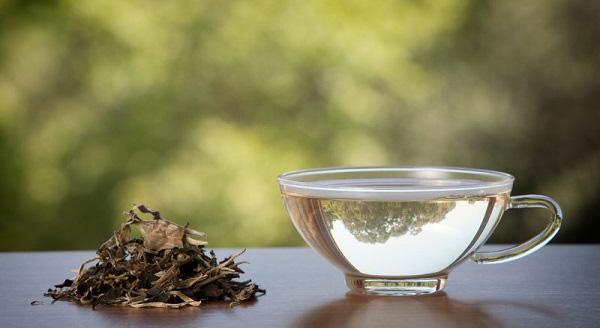 چای سفید چیست و چه خواص بی نظیری دارد؟