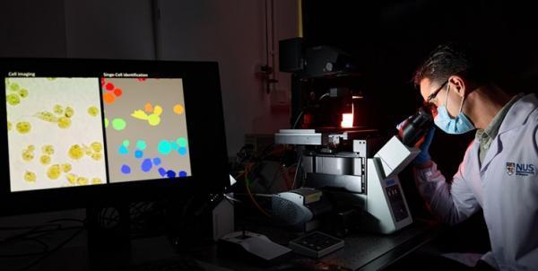 هوش مصنوعی سلول های سرطانی را در 35 دقیقه شناسایی می نماید