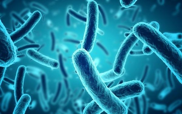 باکتری ها چقدر عمر می نمایند؟