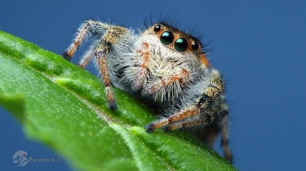 تشخیص جاندار از بی جان به روش عنکبوت ها